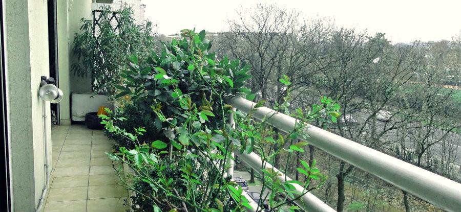 Balcon sur le bois - Jasmin - Hippodrome